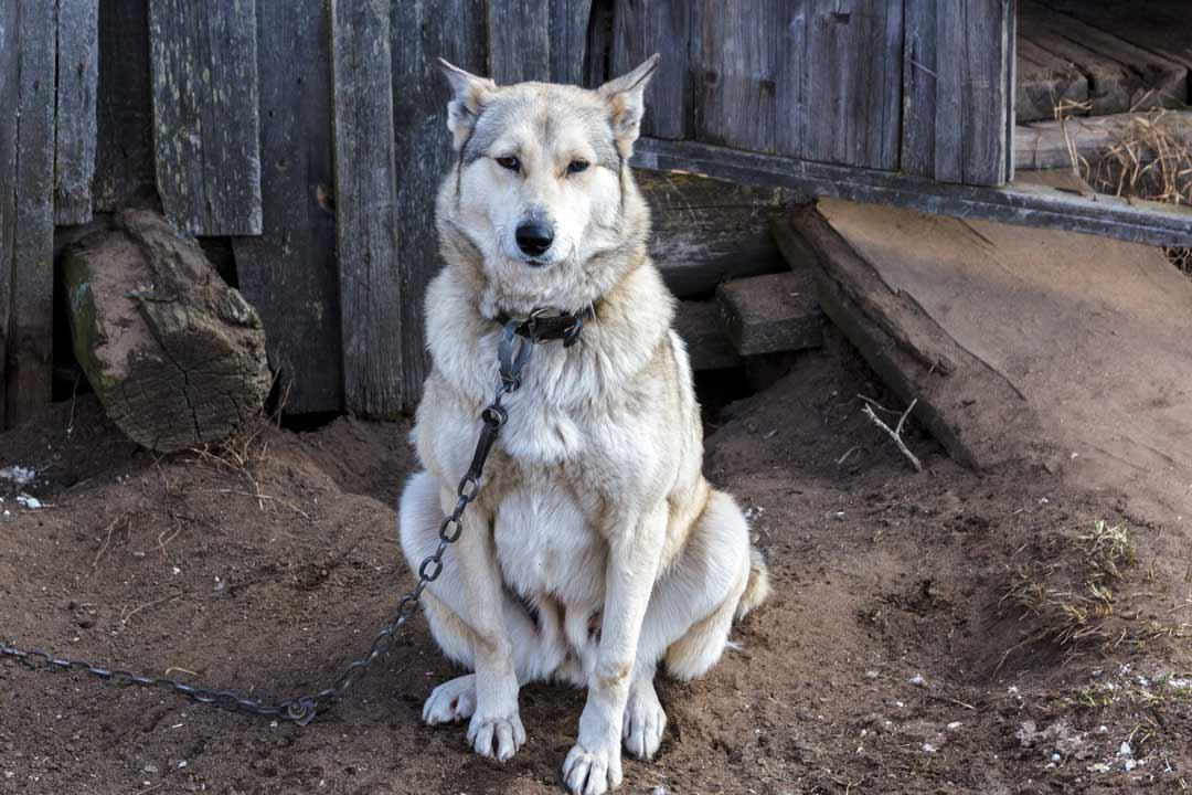 Собака сидит у забора