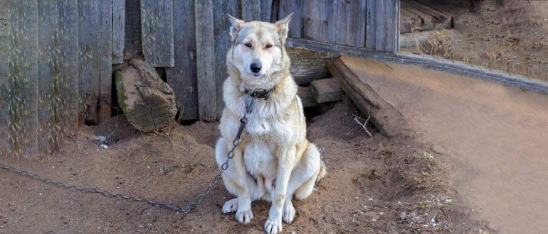 Собака копает ямы