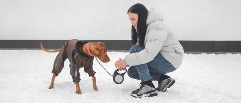 Собака в теплой одежде
